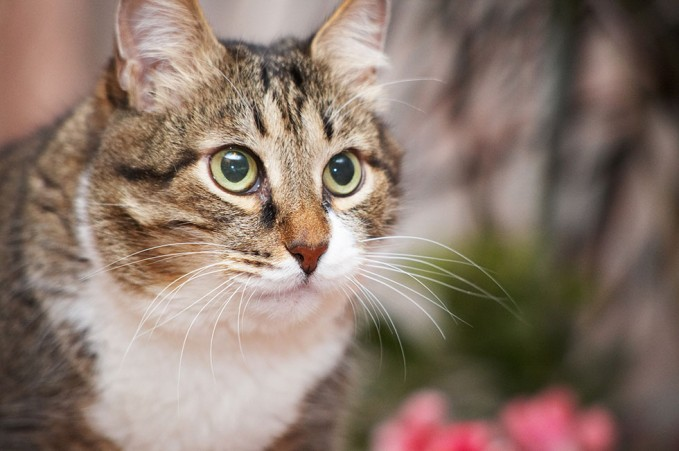 hyperthyroidism in cats prognosis