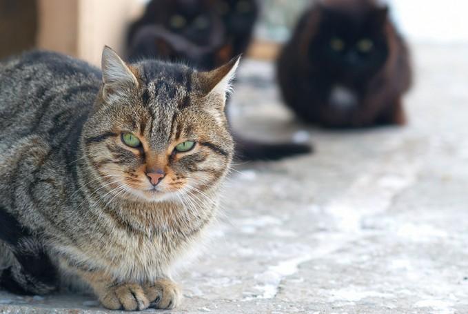 Neutering a Cat