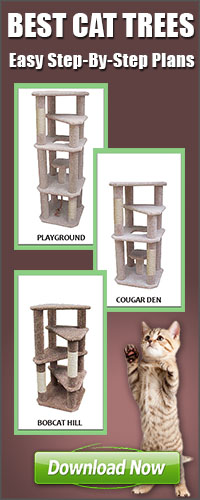 Best Cat Trees Easy Step by Step Instructions