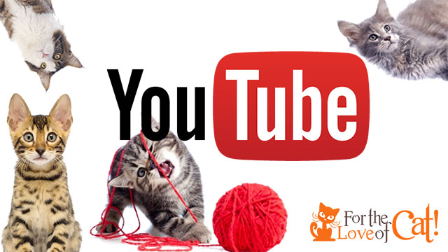 Cats YouTube Channel Subscribe