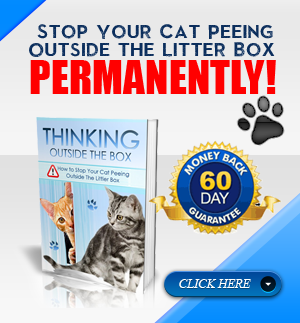 stop-cat-peeing